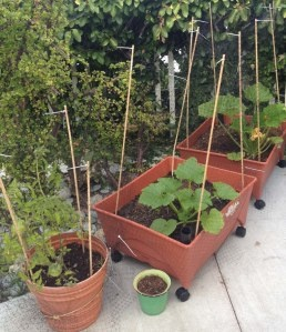 My Organic Container Ve able Garden