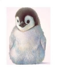 A Mothers Love Collection - Penquin Chick