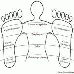 Tension nerveuse / Surmenage / Dépression nerveuse vu par la Réflexologie Plantaire