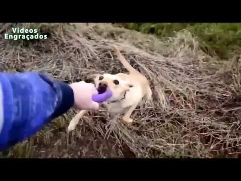 video lucu binatang: funny animals cats aparri