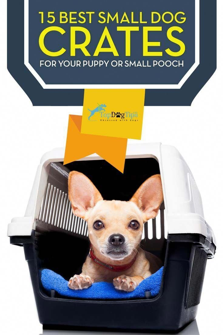 Top 15 Best Small Dog Crate For Small Dogs Or Puppies 2017 Update Best Small Dogs Small Dog Crate Dog Crate