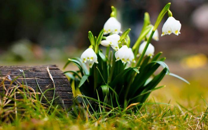 Картинки на рабочий стол весна широкоформатные
