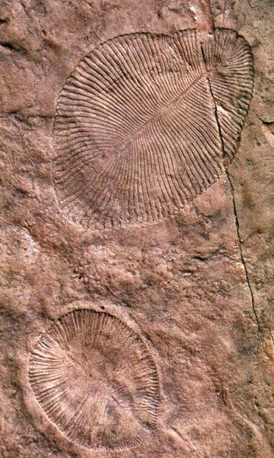 Fosil Ediacaran Kontroversial Hidup di Darat