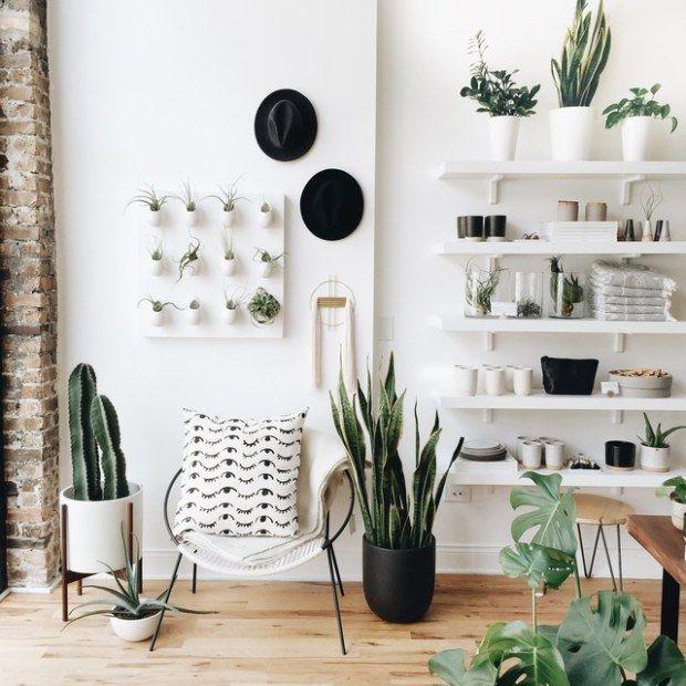 plantas de interior decoración y beneficios