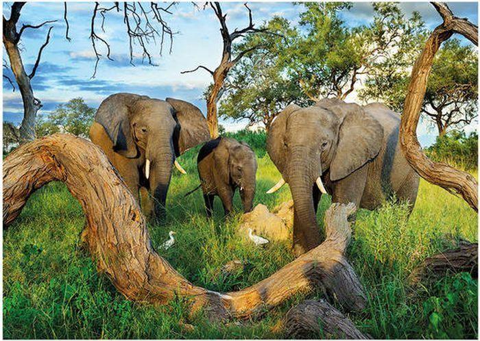 Puzzle DINO 1000 dílků - Sloni z Botswany