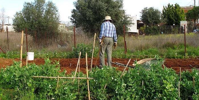 Ένα φυσικό εντομοκτόνο για τα φυτά σου