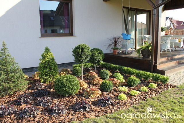 Przedwiośnie ogrodu..:) - strona 18 - Forum ogrodnicze - Ogrodowisko