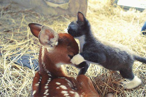 Kitten and fawn. So incredibly precious!