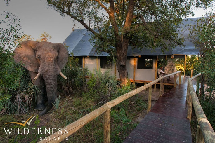 Chitabe Lediba - Guests can view the multitude of wildlife which comes to drink by day from the comfort of the camp itself. #Safari #Africa #Botswana #WildernessSafaris