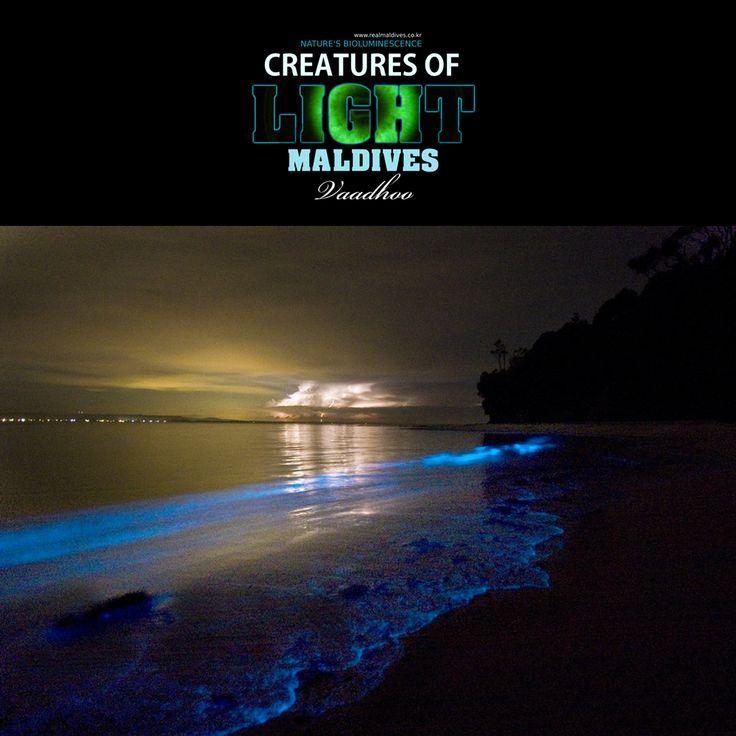 아래의 사진은 몰디브 북단 라 아톨 (Raa Atoll)에 위치한  로컬 섬 바두 (Vaadhoo)에서 촬영된 것입니다.