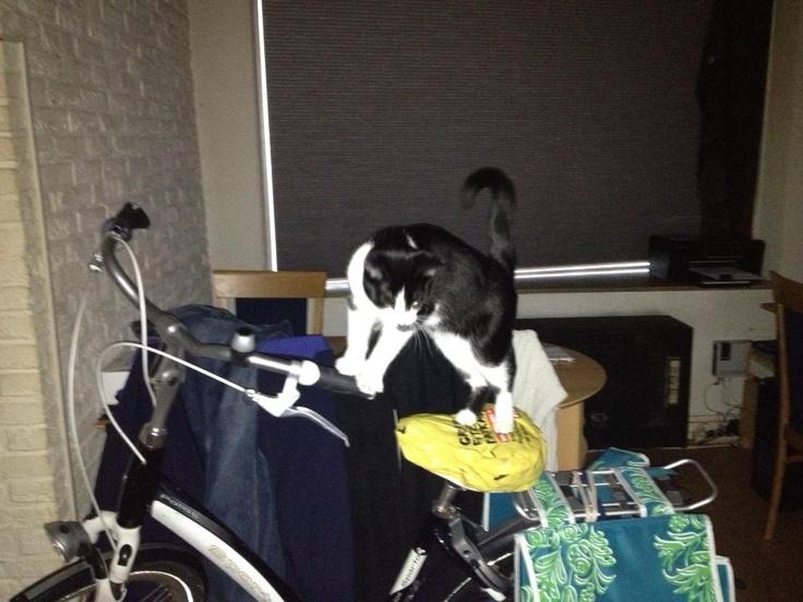 Huiskat op de fiets