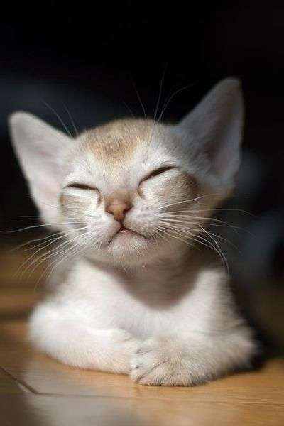 This kitty cat is so Buddha like