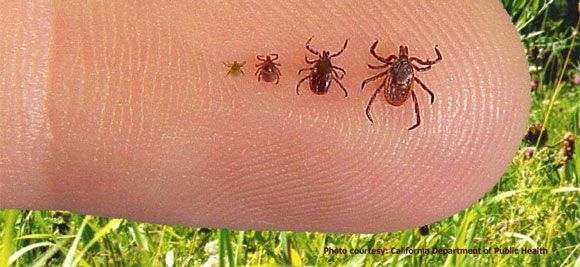 how to get rid of baby ticks on humans