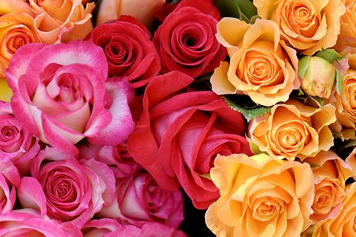 423 best Blumen images on Pinterest Flowers, Flower art and Window