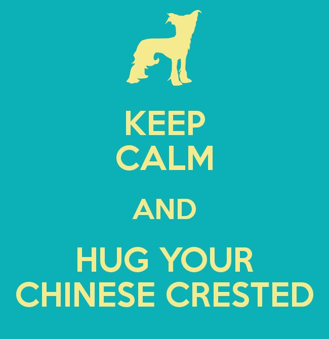 KEEP CALM AND HUG YOUR CHINESE CRESTED - Great advice, something I do all the time! ;)