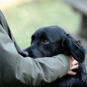 the look: Beautiful Animal, Lovabl Animal, Black Dogs, Call Adorable, Creatures Comforter, God Creatures, Black Labs, Adorable Critter, Dogs Faces