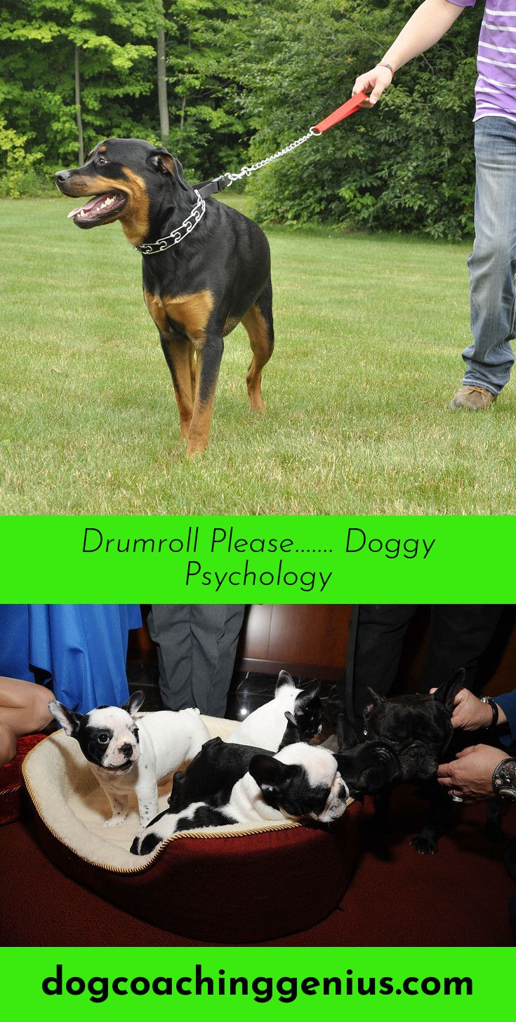 Read more about dog growling doggy psychology pinterest dog