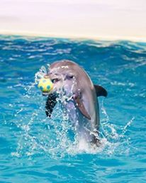 Who has a long holiday? Kick it off with a visit to Dubai Dolphinarium, tickets start from only AED40 TODAY!