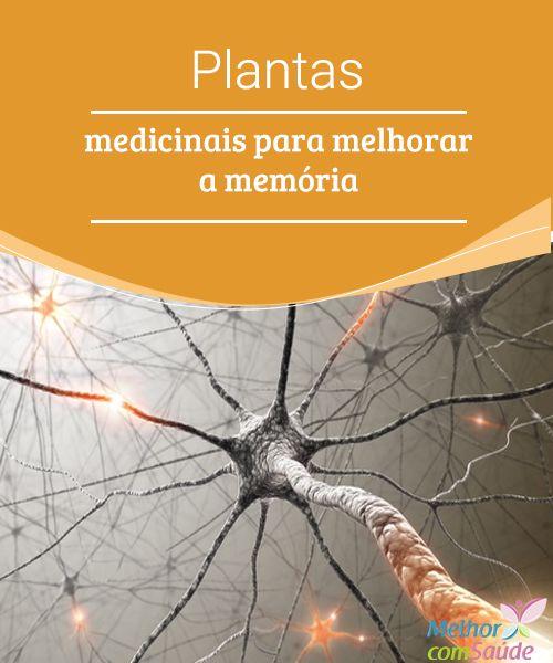 Plantas medicinais para melhorar a memória   Saiba mais sobre a perda progressiva de memória, condição que pode chegar a afetar nossa qualidade de vida de uma maneira muito complicada.