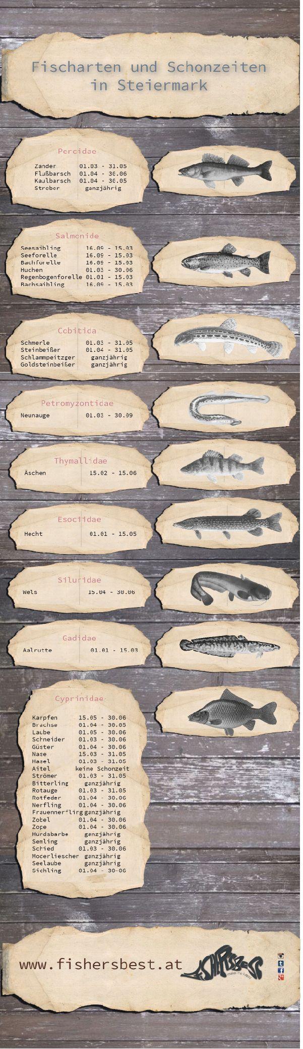 hier eine kleine Hilfe für alle Fischer unter euch. Wann die Schonzeiten für die einzelnen Fischarten in der Steiermark sind. Achtung für jedes Bundesland in Österreich gelten andere Schonzeiten. #fisch #trout #pike #forelle #hecht # zander #waller # wels #catfish #natur #fishing #fishinglifestyle