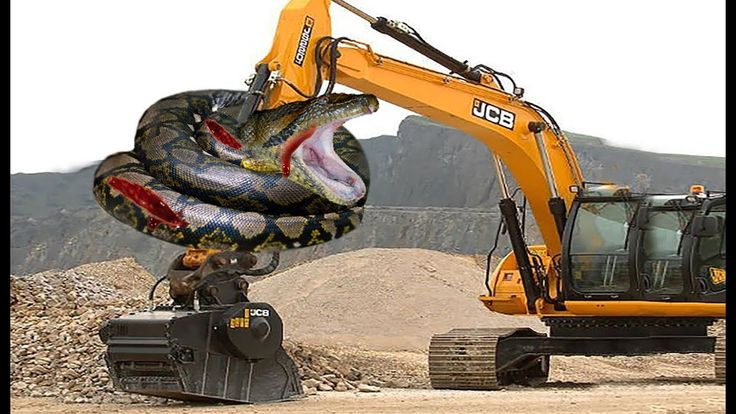 Excavator Catches Giant Anaconda While Digging  | Snake Attack Excavator.
