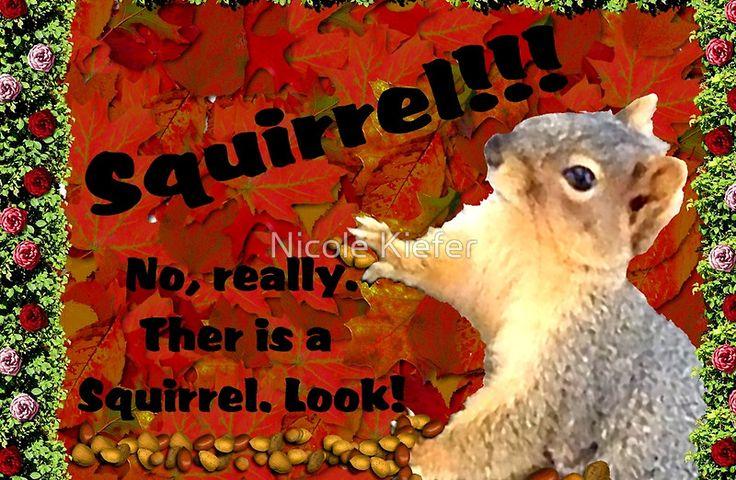 Squirrel... No, really... look