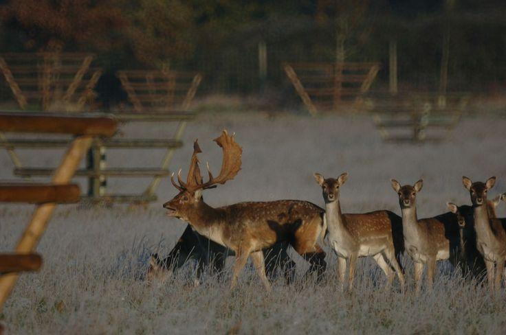 Deer Rut Safaris
