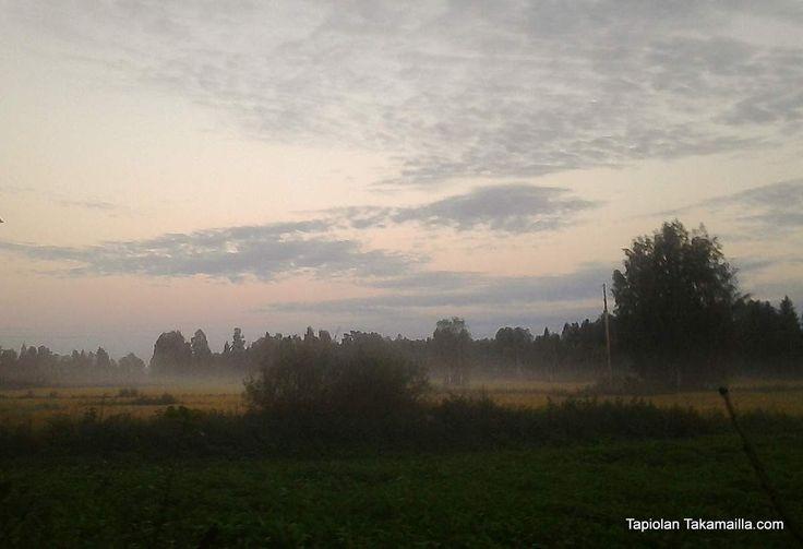 Morning on August 10th (Pigeon hunting season start) sepelkyyhkyjahdin avaus 2013