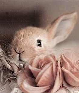 Dear Mary, I love this sweet bunny! I hope it makes you think Spring!  Enjoy the rest of your weekend! Love Mary Anne ~ <3<3 ~ 03~05~16 ~.