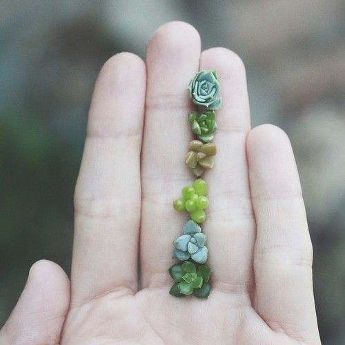 How to propagate succulents ==