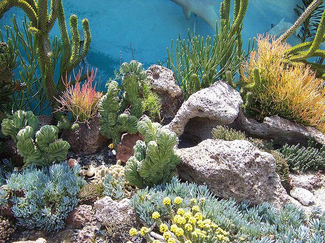 Taken At The Quail Botanical Gardens In Encinitas CA