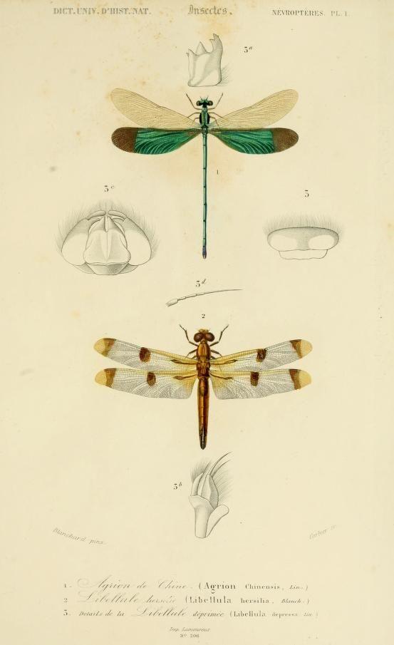 1861. Dictionnaire universel d'histoire naturelle résumant et complétant tous les faits présentés par les encyclopédies (by Orbigny Charles)