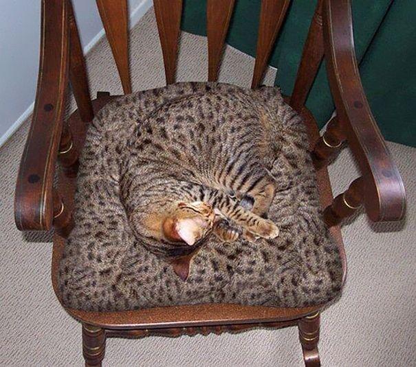 Ao contrário dos seres-humanos, animais de estimação conseguem se camuflarem nas mais variadas paisagens e objetos para não se submeterem a ordem de seus donos.