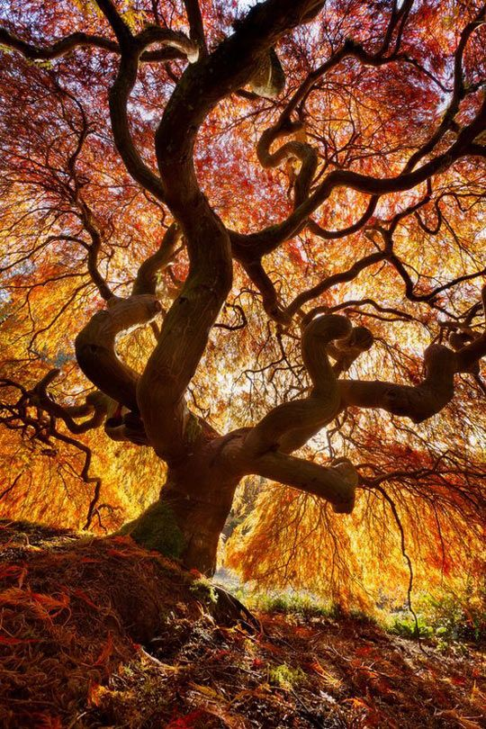 Fire tree, 'HDR' is such a Great Medium. Hard to get right without BIG landscapes~ This IS right, really right!