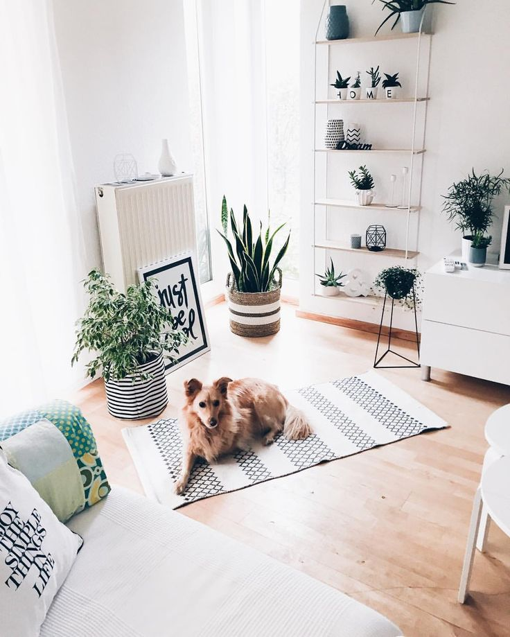Guten Morgen It's Friyay .... Henna wartet schon aufgeregt auf ihrem Lieblingsteppich , dass sie Gassi gehen darf ..... But first Coffee . . #henna #dogsofinstagram #inspo #interior #inspohome #interiors #interiordesign #interior4all #nordic #nordichome #solebich #germaninteriorbloggers #interieur