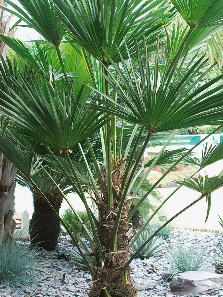 See which hardy tropical and temperate plants will survive the winter in zones 6 and up, plus learn how to keep these beauties thriving with growing tips from HGTV Garden.