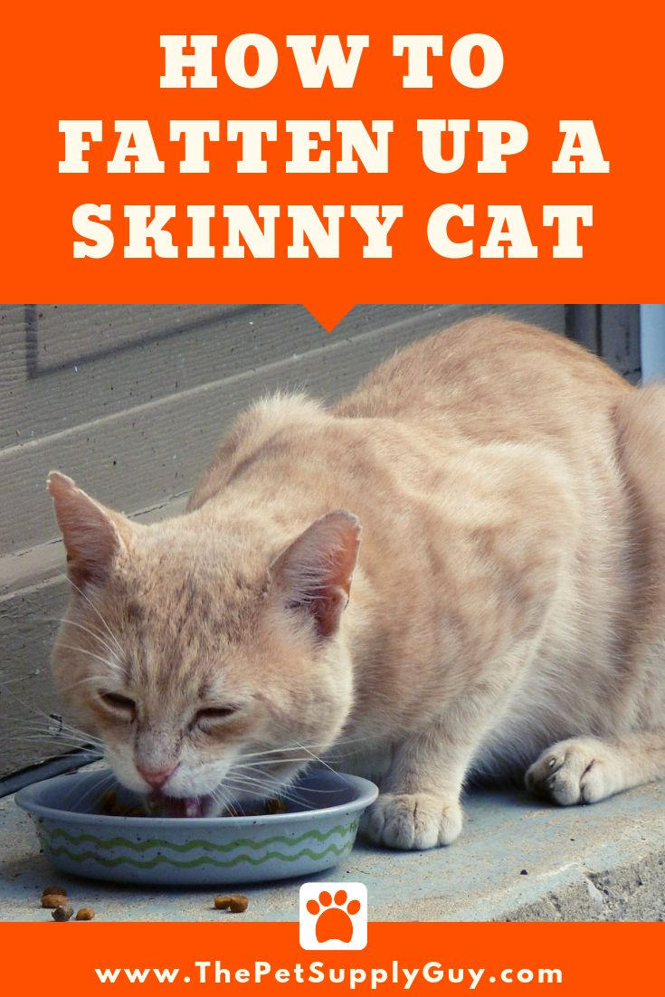 How to Fatten Up a Skinny Cat The Pet Supply Guy Cats