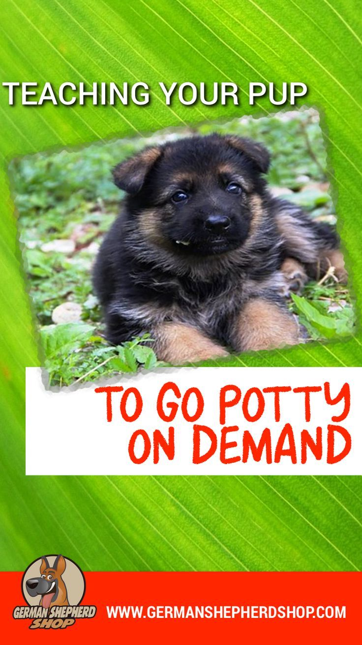 Teaching Your Pup To Go Potty On Command Training Your Dog Dog