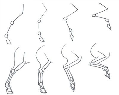 How to draw horses back legs side view.