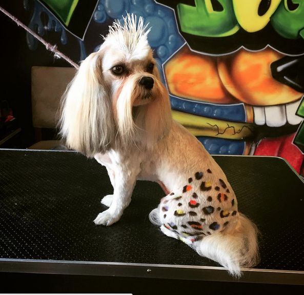 20 best creative grooming images on pinterest creative grooming charlottes favorite pet grooming salon self serve dog wash solutioingenieria Choice Image