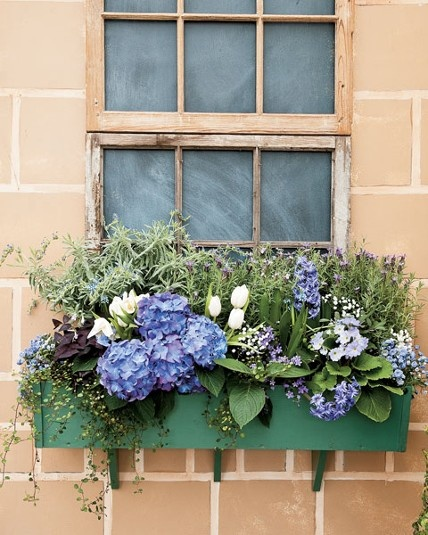 what to put in window boxes for the winter 2