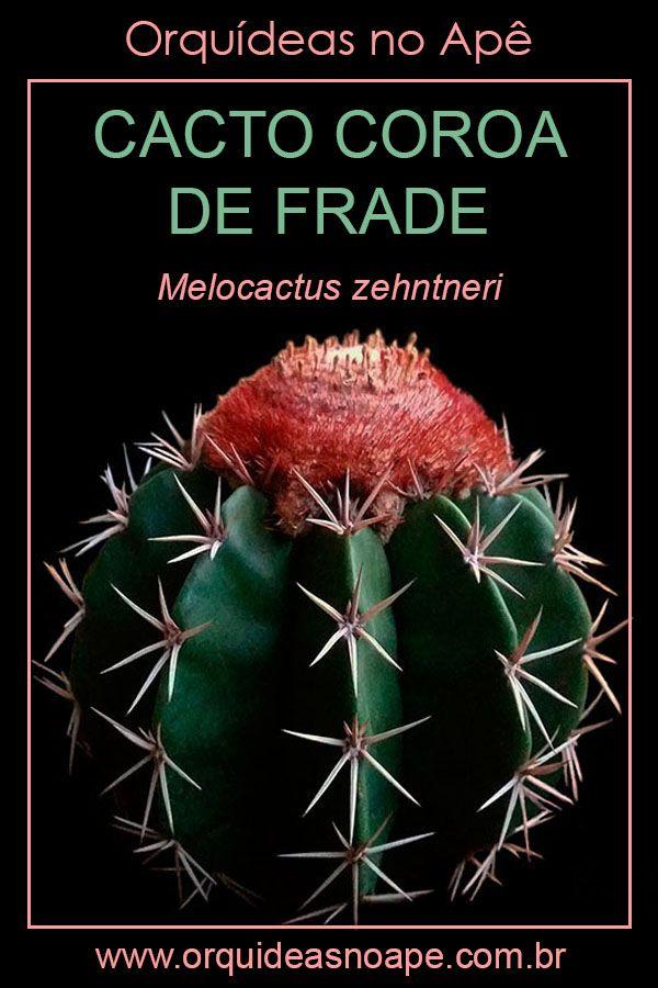 Cacto Coroa De Frade Melocactus Zehntneri Em 2020 Cactos E