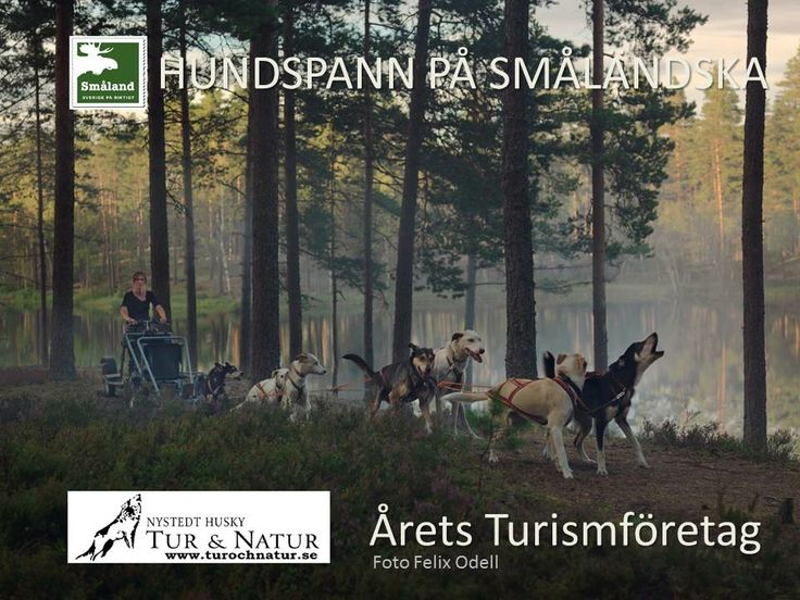Experience an unique adventure of Småland - Nystedt Husky Tur och natur.