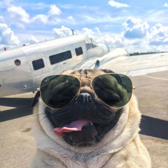 18 Times Doug the Pug Just Got You | http://www.hercampus.com/entertainment/18-times-doug-pug-just-got-you