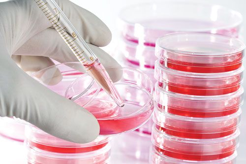 Factors Affecting Cell Culture