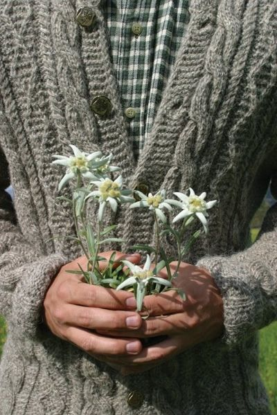 Edelweiss. Special memories of seeing this in Switzerland & we all burst into the song! Haha