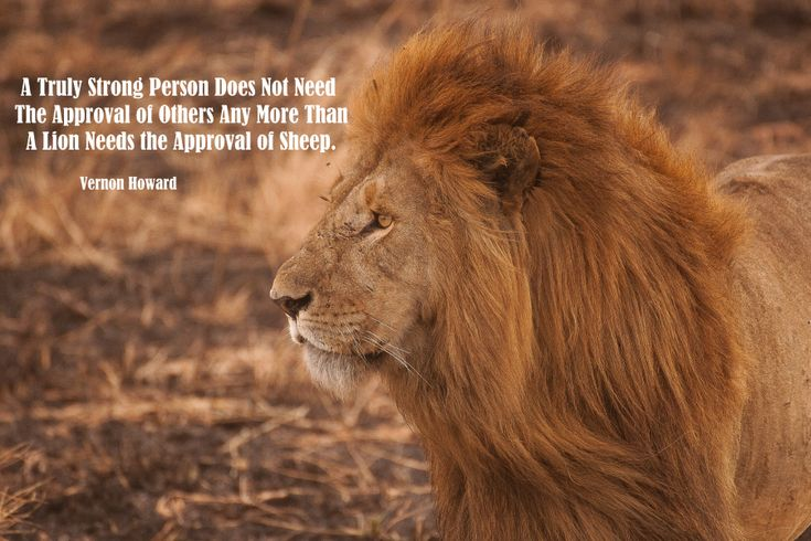 Everyone has that place deep down of being a strong person. There is nothing different between them and you. 💖💖 It's just a matter of repeating until it becomes a belief. Just like you did with all the negative beliefs. Just persist and it MUST be so. 🎇🎇#vernonhoward #quote #strength #strongperson #innerpower #lionpower #innerstrength #learning #growing #keepmovingforward #upwards #goforit #liveyourdream #daretobelieve #faith #trust #nevergiveup #believeinyou