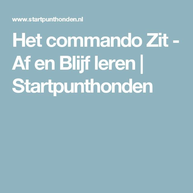 Het commando Zit - Af en Blijf leren   Startpunthonden