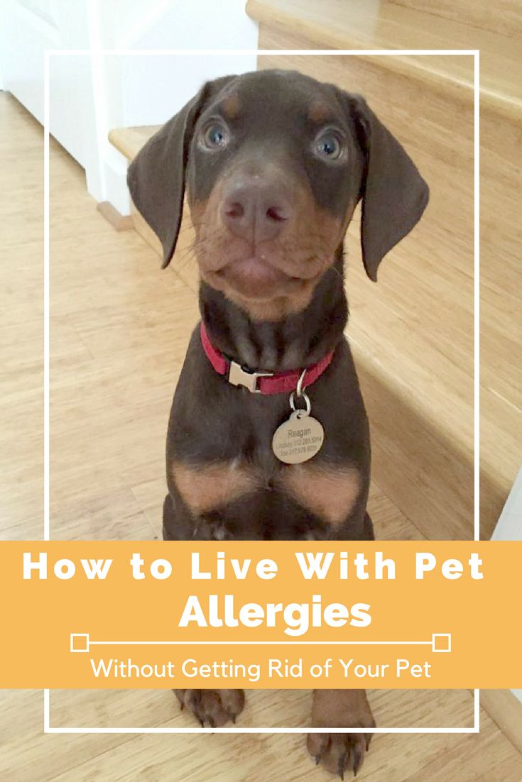 Top surprising things you can do to deal with pet allergies. I was allergic to our new puppy and these solutions saved the day! Dog allergies are no fun!