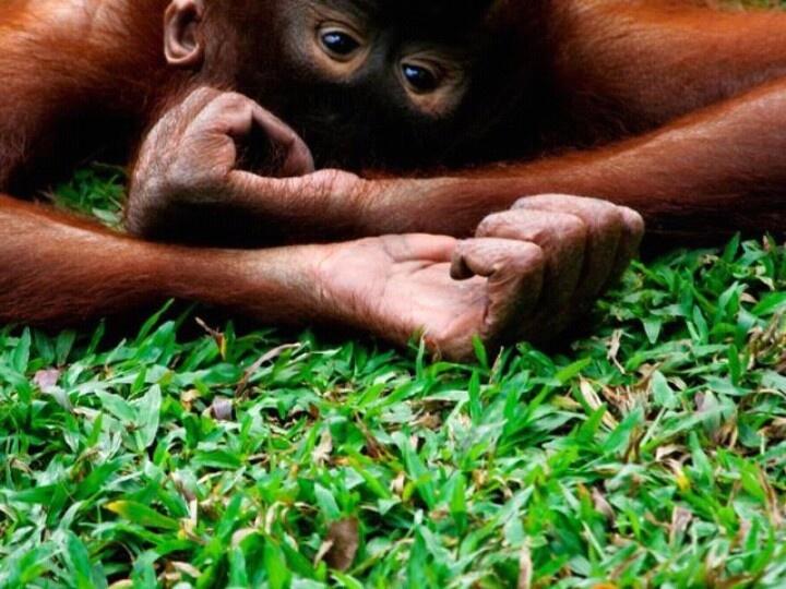 I <3 monkeys